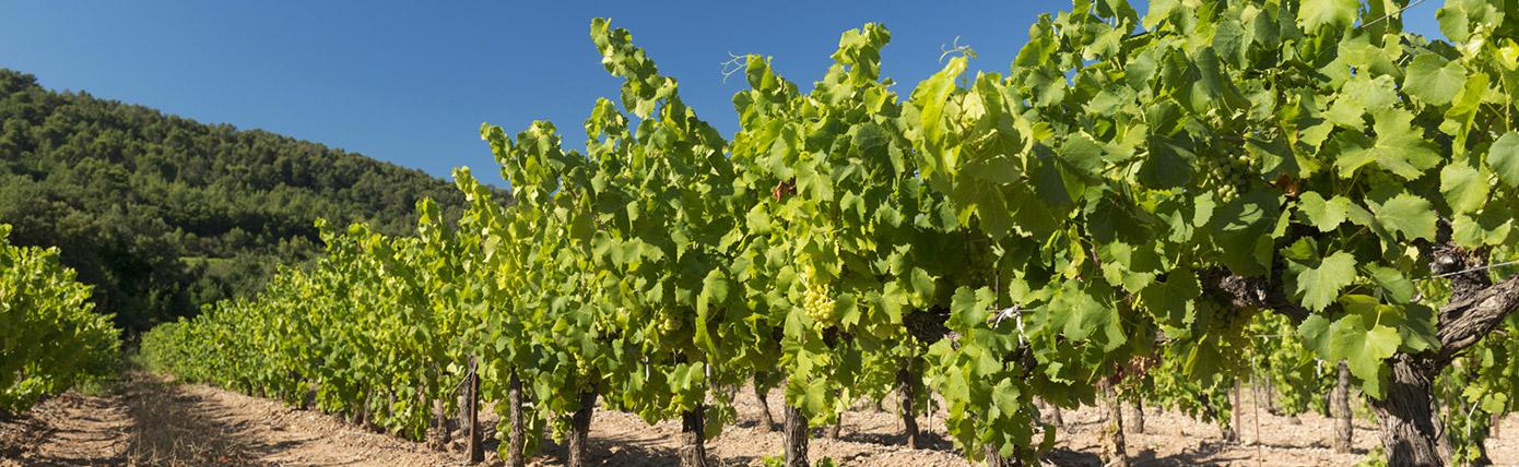 Fabre Wines